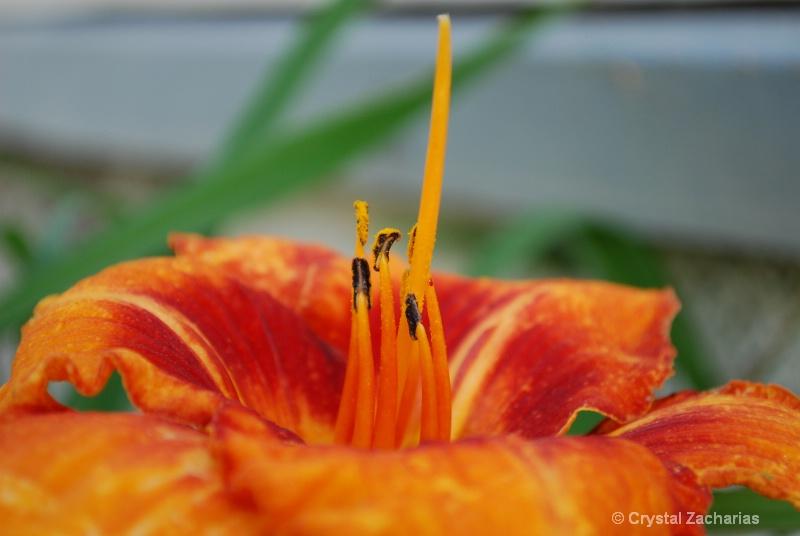 Orange Stems