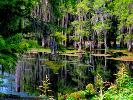 Bayou Desiard Monroe, Louisiana