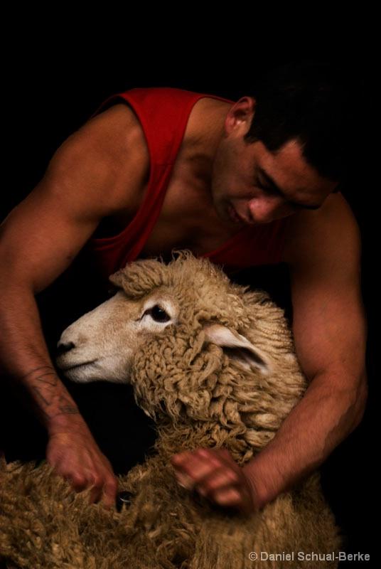 Shear Pleasures - ID: 7547757 © Daniel Schual-Berke