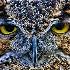© Leslie J. Morris PhotoID # 7549009: Who you lookin at?