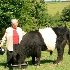© Kevin Fogle PhotoID# 7549859: Belted Galloway cow