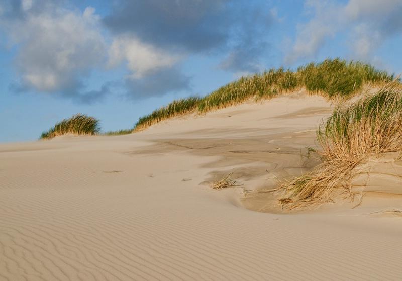 Dune - Raabjerg Mile