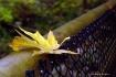Balancing Leaf