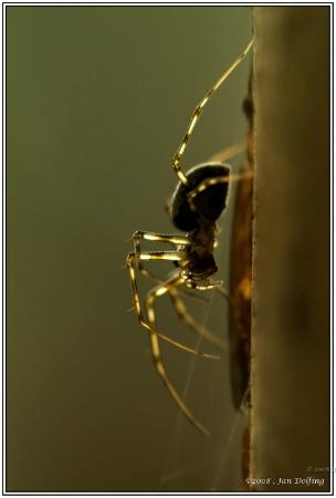 Miniature spider