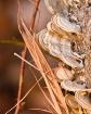 Tree Spores