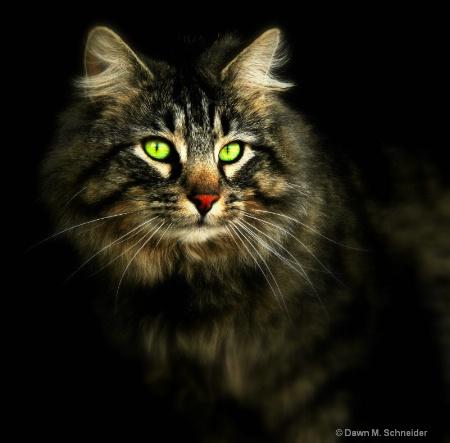 Soft Focus Kitty