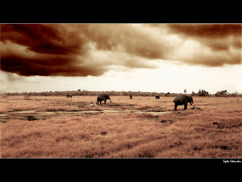 The Lost World in Way Kambas