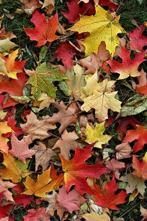 ~Autumn Leaves~