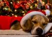 Waiting On Santa