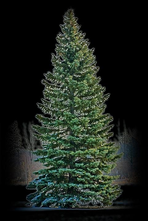 (H) Oh Christmas Tree.....
