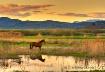Horse in landscap...