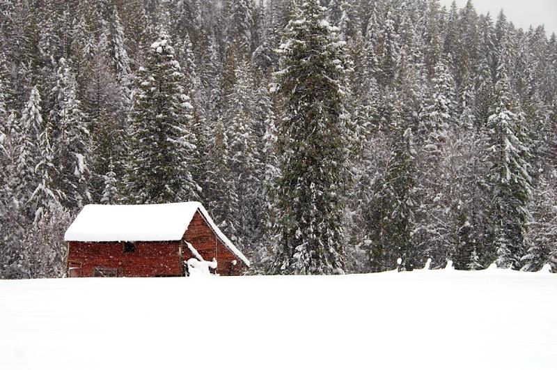 White Christmas 2008