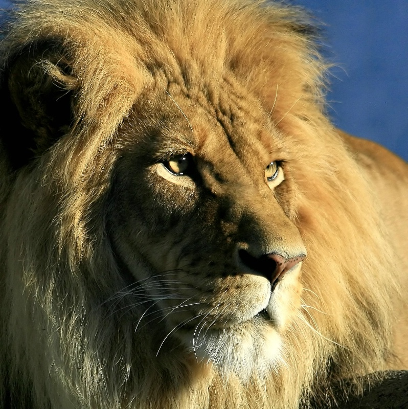 Portrait of the King - ID: 7663324 © Joseph T. Pilonero