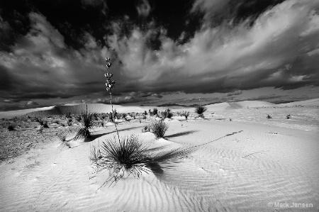 Yucca Vista