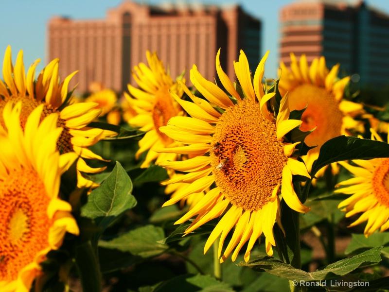 Urbane Flora - ID: 7666253 © Ron Livingston