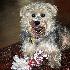© BoniRay Chaney PhotoID # 7670547: My Dog Ben