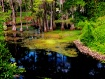 Beautiful Bayou D...