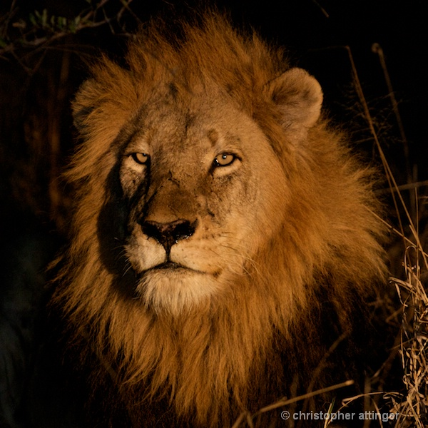 DSC_2106 - lion head at night - ID: 7672513 © Chris Attinger