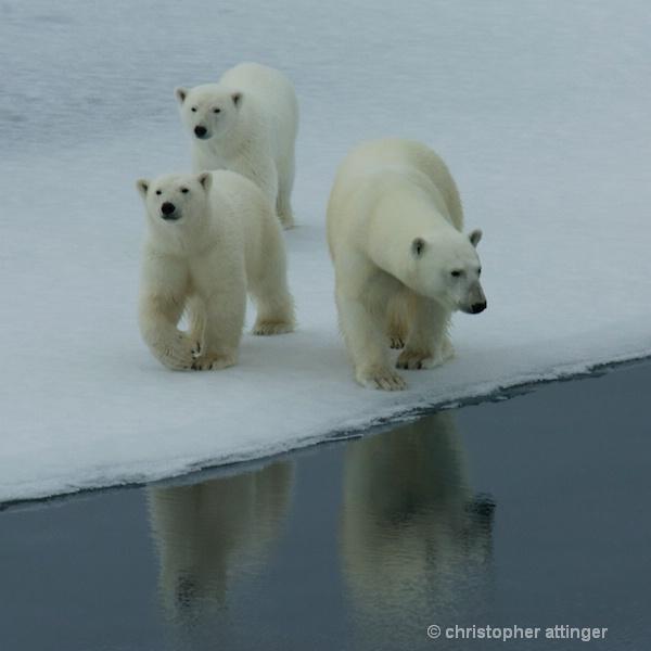 DSC_3021 - Mother & cubs - ID: 7672803 © Chris Attinger