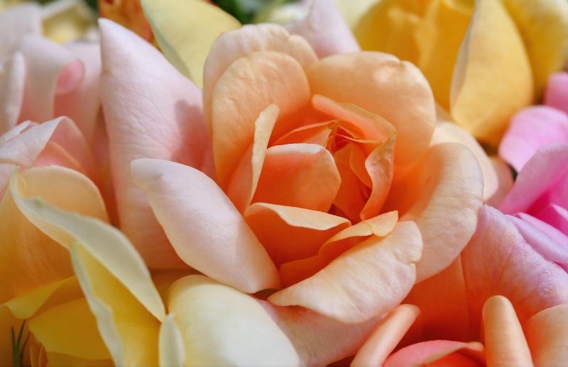 Bouquet for Carole