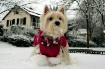 Winter Pooch...