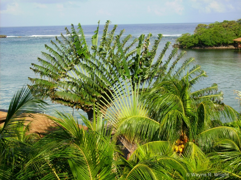 Palm - ID: 7709368 © Wayne R. Wright