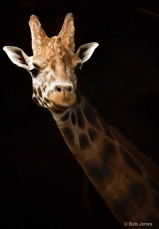 Giraffe at the Door