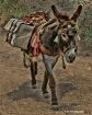 Packing Donkey