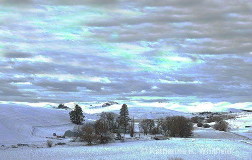 Palouse In Winter - ID: 7730792 © Kathy K. Whitfield