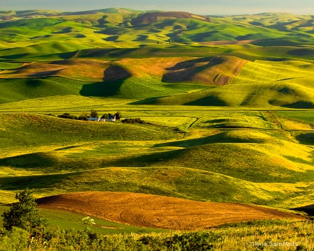 Colors and Shapes of the Palouse