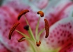 Stamen Attraction