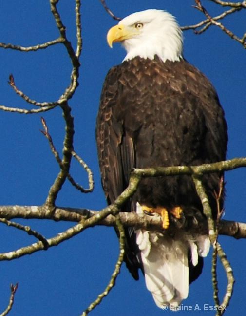 Eagle's Domain