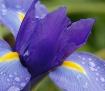 Purple and Rain