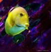 Fish With Jelly F...