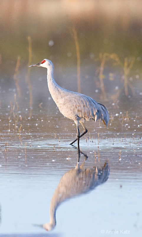 early bird - ID: 7805541 © Annie Katz