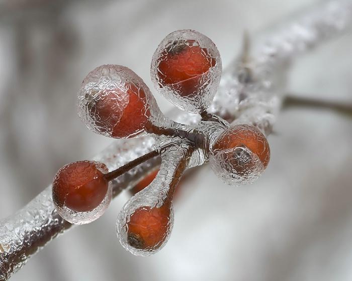 Ice Storm #2