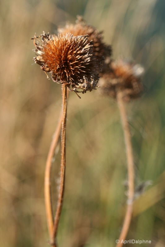 At The End of The Long Walk - ID: 7812547 © Natural/Abstract Photography