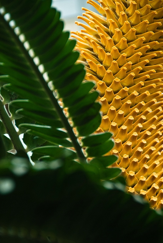 Cone Of Gold