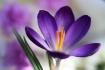 Flora's Templ...