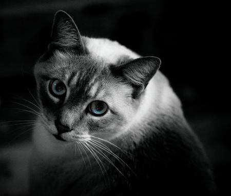 Ole Blue Eyes