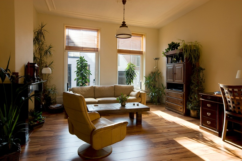 Sun splashed living room