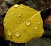 Raindrops on........