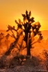 Mojave Desert Sun...