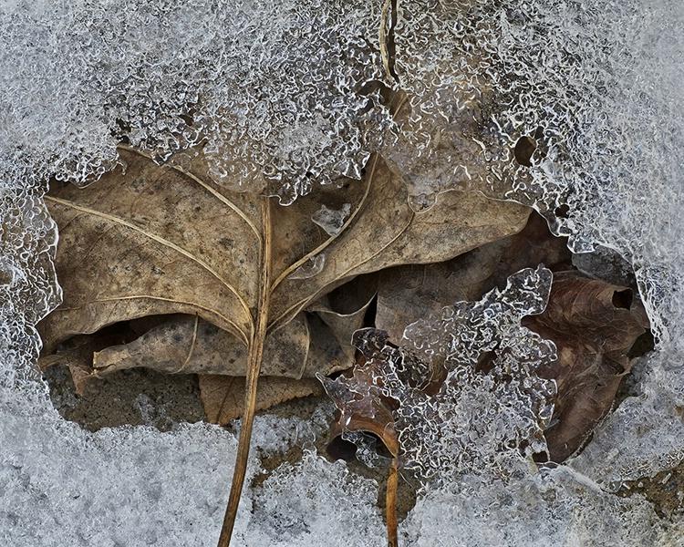 Ice Storm #3