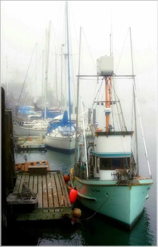 Marina in the Fog