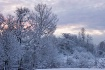Dawning Snow