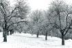 Land Of Snow & Ic...