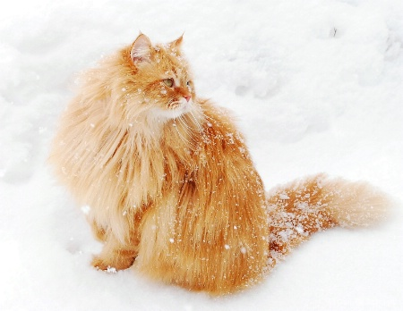 Snow Flake Cat 2