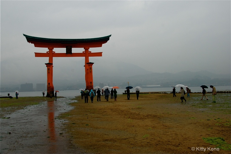 Tori in the Rain in Miyajima - ID: 7901753 © Kitty R. Kono