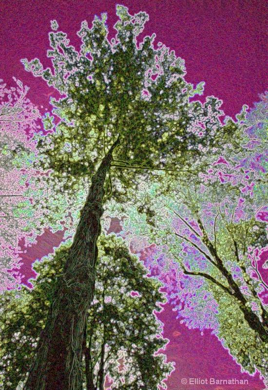 Magic Forest #14 - ID: 7916501 © Elliot S. Barnathan